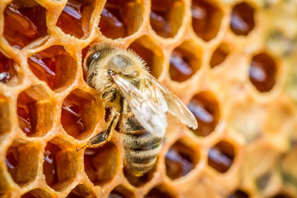 Honey & Beekeeping Fair